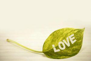 משפטי מפתח נפלאים משירי אהבה
