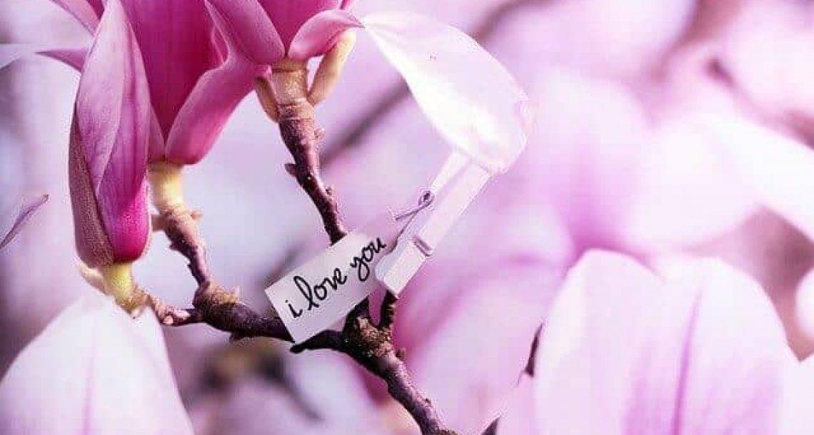 משפטים חוכמה על אהבה